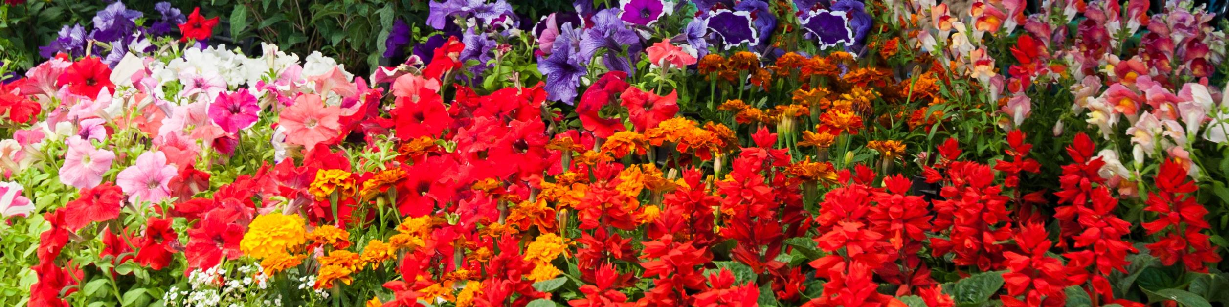 flower-fair